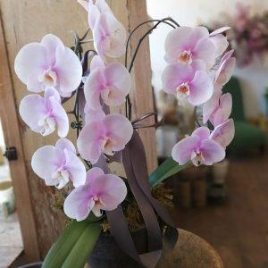 Planted Orchids Arrangement
